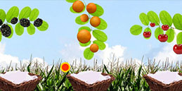 Preschool games free online: Drop the fruits!